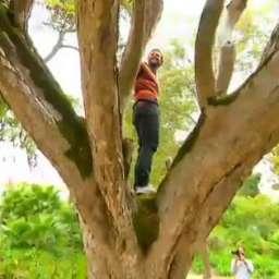 """Semana 2: """"Árvore dos Sonhos"""" mantém liderança contra """"Mental Samurai"""""""