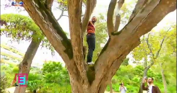 """Semana 2: """"Árvore dos Sonhos"""" mantém liderança contra """"MentalSamurai"""""""