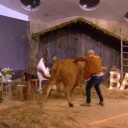 """""""Noite de Cristina""""na TVI: vaca """"descontrola-se"""" em estúdio"""