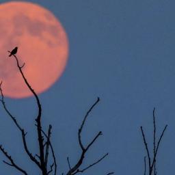 ATENÇÃO! Olhos para cima: hoje há Lua de Morango